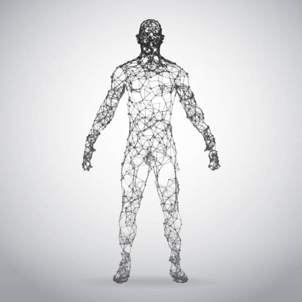 3d wire frame human body polygonal low poly - wire frame model stock illustrations