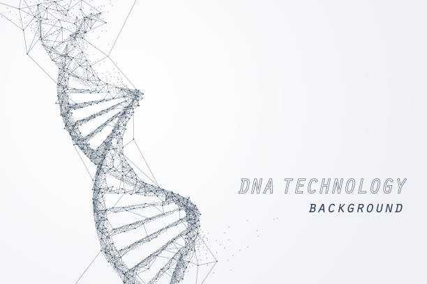 stockillustraties, clipart, cartoons en iconen met wire frame van dna virtuele, technologie en medisch concept - dna