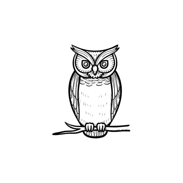 Owl clipart black and white, Owl black and white Transparent FREE for  download on WebStockReview 2020