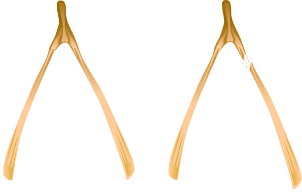 Royalty Free Wishbone Clip Art, Vector Images ...
