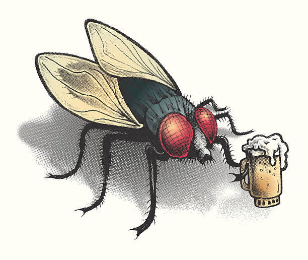 BAR FLY with a frothy cold beer this is a hand drawn image turned to a halftone screen overlapping vector color paths that can be changed at your choice of colors. this bar fly can be used for all kinds of things. fly insect stock illustrations