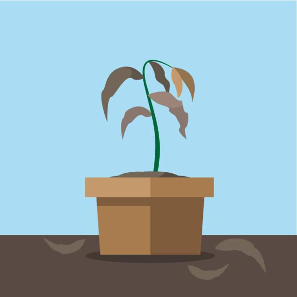 ilustrações de stock, clip art, desenhos animados e ícones de withered plant - planta morta