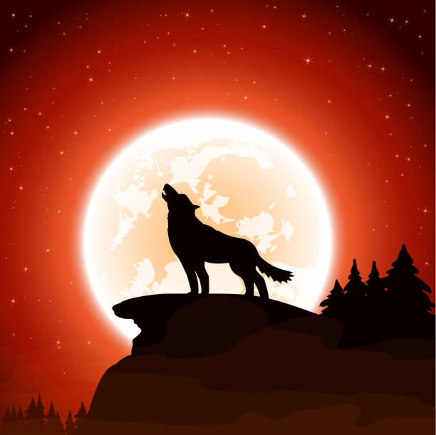Wolf and Moon on sky background Orange Halloween night background with wolf and Moon, illustration. silhouette of a howling coyote stock illustrations