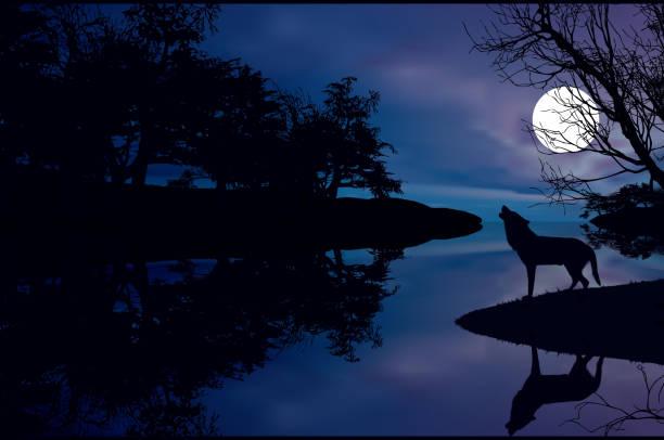 bildbanksillustrationer, clip art samt tecknat material och ikoner med wolf and moon - hund skog