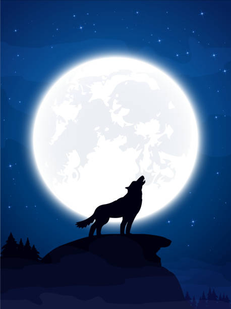Wolf and Moon Halloween theme, night background with wolf and Moon, illustration. silhouette of a howling coyote stock illustrations