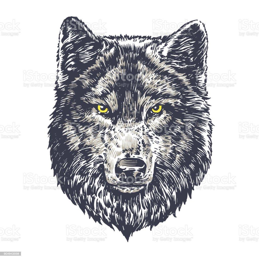 Lobo oscuro sobre fondo blanco ilustración de lobo oscuro sobre fondo blanco y más vectores libres de derechos de amarillo - color libre de derechos