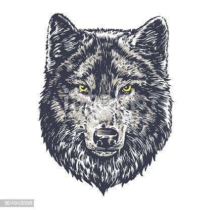 Wolf dark on white background
