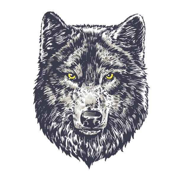 illustrazioni stock, clip art, cartoni animati e icone di tendenza di wolf dark on white background - lupo