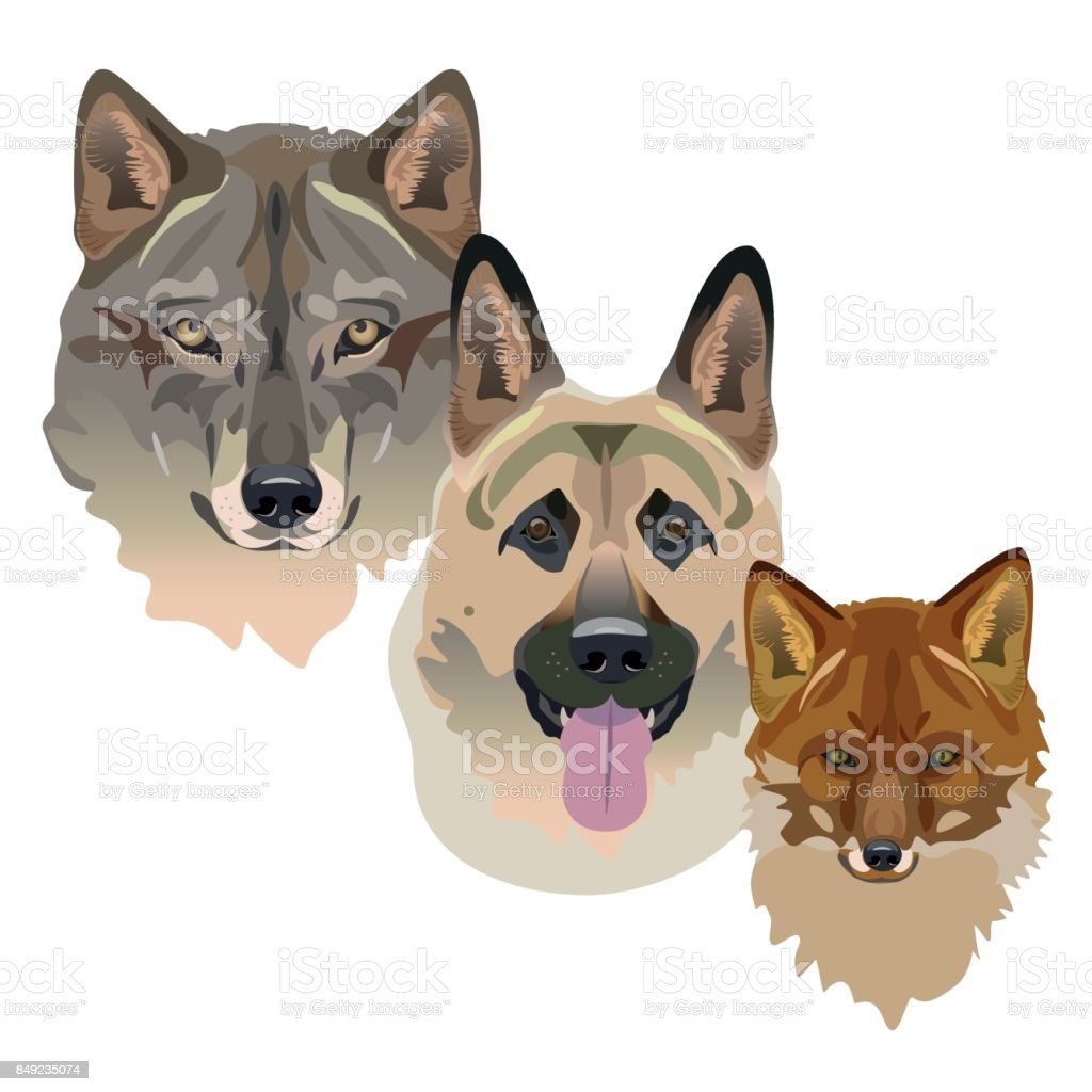 オオカミ犬およびフォックス ふわふわのベクターアート素材や