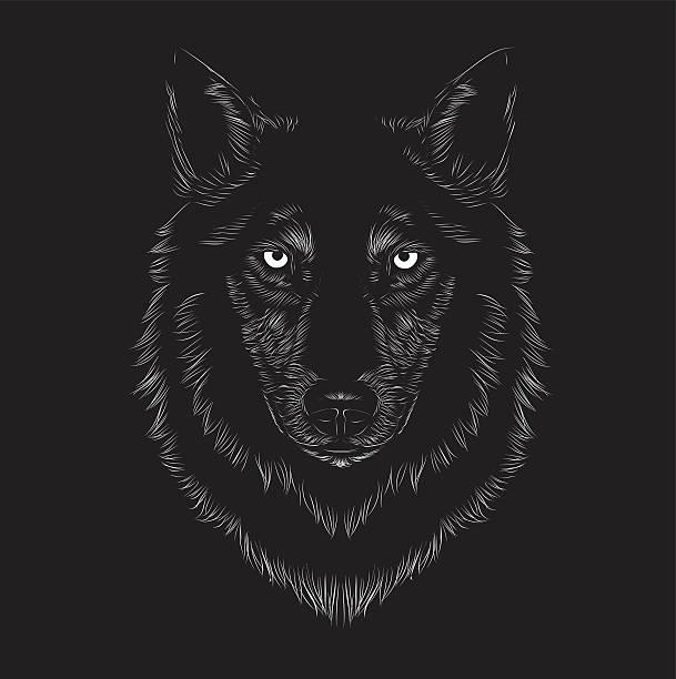 illustrazioni stock, clip art, cartoni animati e icone di tendenza di wolf viso - lupo