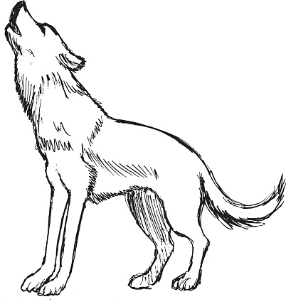 Wolf From Forest Stock Illustration Download Image Now Istock