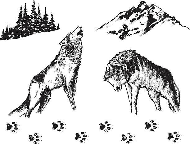 illustrazioni stock, clip art, cartoni animati e icone di tendenza di wolf-elementi grafici - lupo
