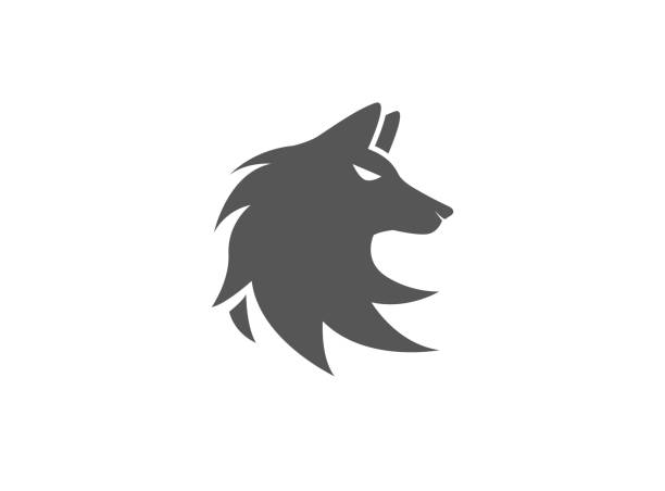Wolf head logo fox face illustration design Wolf head logo fox face illustration design silhouette of a howling coyote stock illustrations