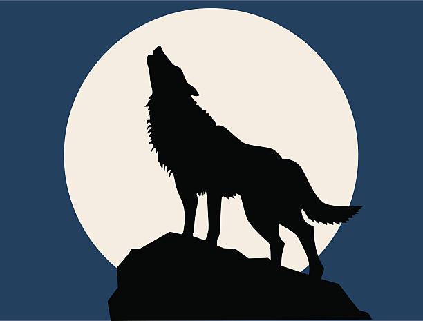 bildbanksillustrationer, clip art samt tecknat material och ikoner med wolf howling at the full moon - varg