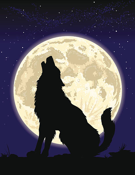 Wolf howling at the Moon Silhouette of a wolf howling at the Moon. 4 spot colors plus black. All major elements are layered separately for easy editing.  Simple gradients and shapes for easy printing, separating and color changes. File formats: EPS and  JPG silhouette of a howling coyote stock illustrations