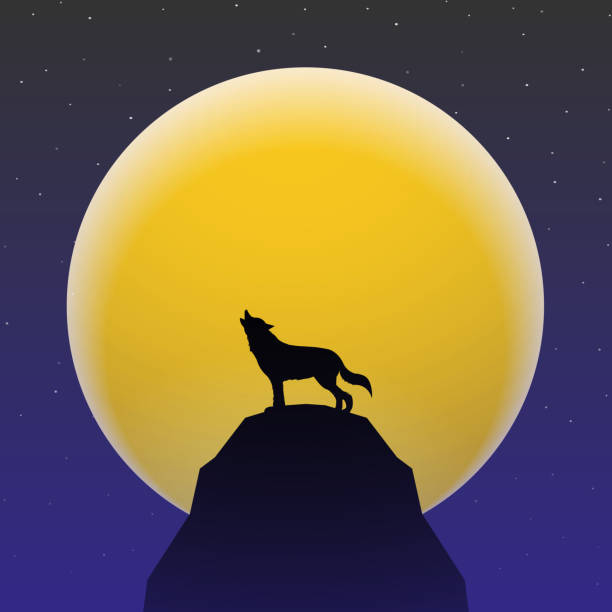 Wolf howling in front of Super moon Wolf howling in front of Super moon silhouette of a howling coyote stock illustrations