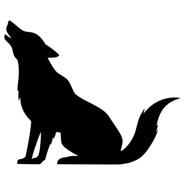 illustrazioni stock, clip art, cartoni animati e icone di tendenza di wolf howling silhouette - lupo