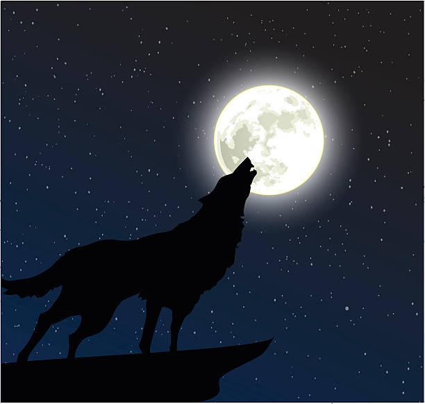 Wolf howling to the moon vector Wolf howling to the moon vector silhouette of a howling coyote stock illustrations