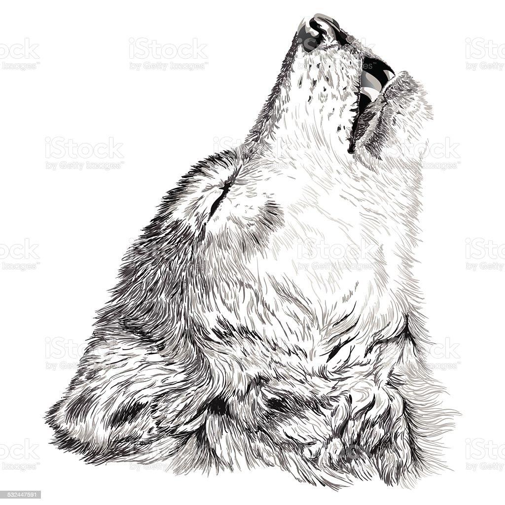 Wolf howls sketch vector art illustration