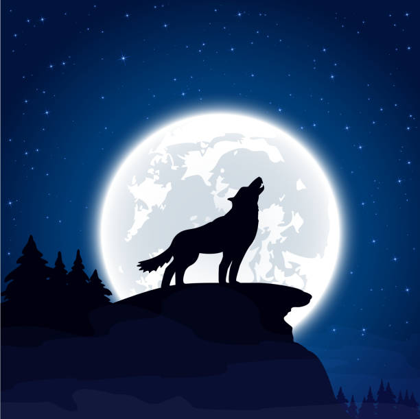 bildbanksillustrationer, clip art samt tecknat material och ikoner med wolf on moon background - wolf