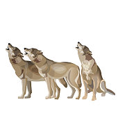 Wolf pack howling. Vector illustration isolated on white background