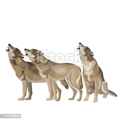 Wolf pack howling.