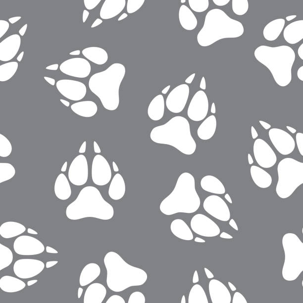 illustrazioni stock, clip art, cartoni animati e icone di tendenza di wolf paw print pattern - lupo
