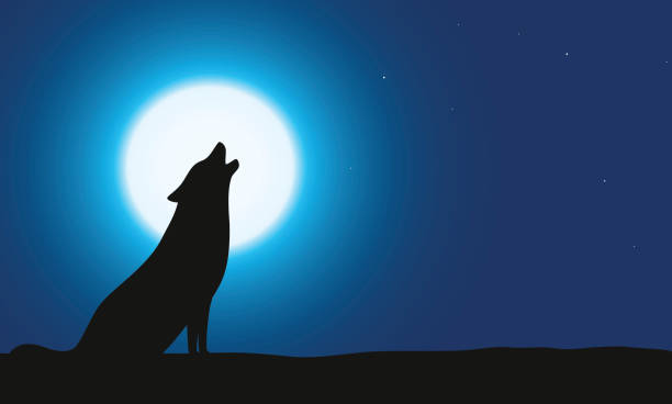 Wolf sitting and roaring on the ground Wolf sitting and roaring on the ground, Background is moon silhouette of a howling coyote stock illustrations