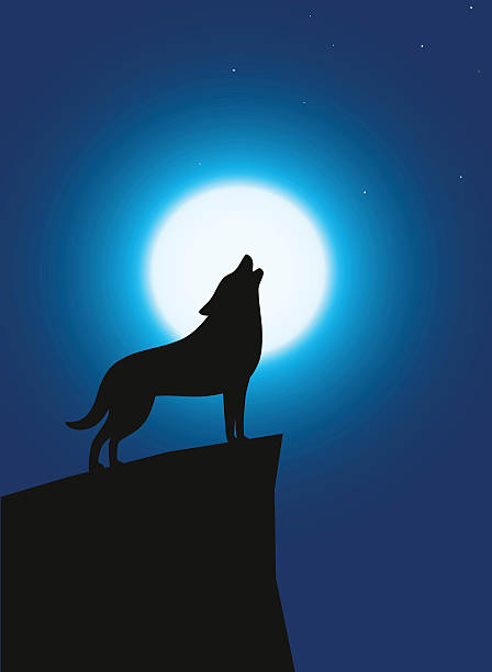 Wolf standing and roaring on the top of the cliff Wolf standing and roaring on the top of the cliff, Background is moon silhouette of a howling coyote stock illustrations
