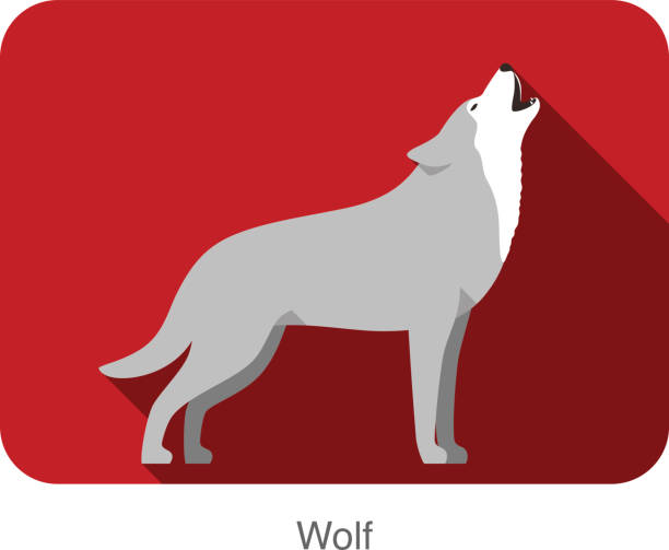 Wolf standing and roaring Wolf standing and roaring silhouette of a howling coyote stock illustrations