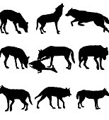 Wolf Silhouette.