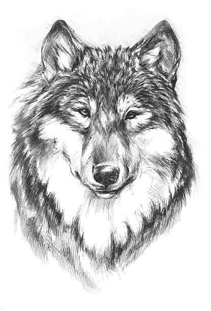 wolf  - landschaftstattoo stock-grafiken, -clipart, -cartoons und -symbole