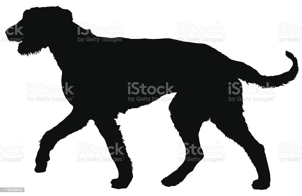 wolfhound royalty-free stock vector art
