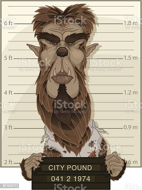 Wolfman Mug Shot The Wolfman has apparently landed himself in the City Pound. That full moon will make you do crazy things... Happy Halloween! Adult stock vector
