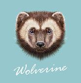 Wolverine Animal. Vector Illustrated Portrait