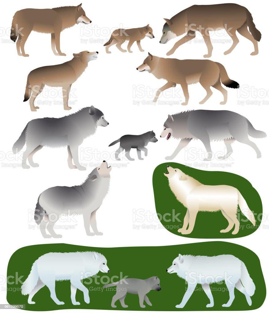 Loups Et Louveteaux Vecteurs Libres De Droits Et Plus D