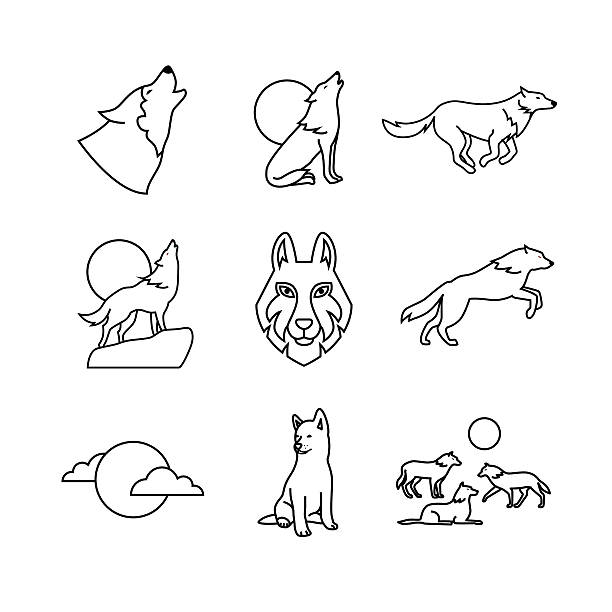 Wolves hauling at the full moon on rock Wolves hauling at the full moon on the rock, jumping and running, wolf cub, head and pack. Thin line art icons set. Modern black symbols isolated on white for infographics or web use. silhouette of a howling coyote stock illustrations