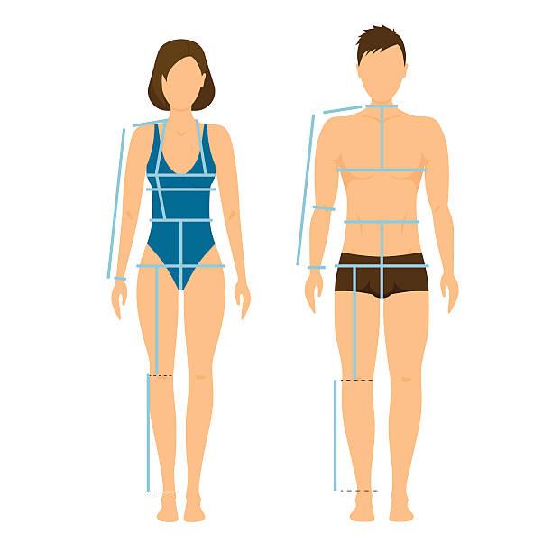 ilustrações de stock, clip art, desenhos animados e ícones de woman and man body front  back for measurement. vector - tronco nu