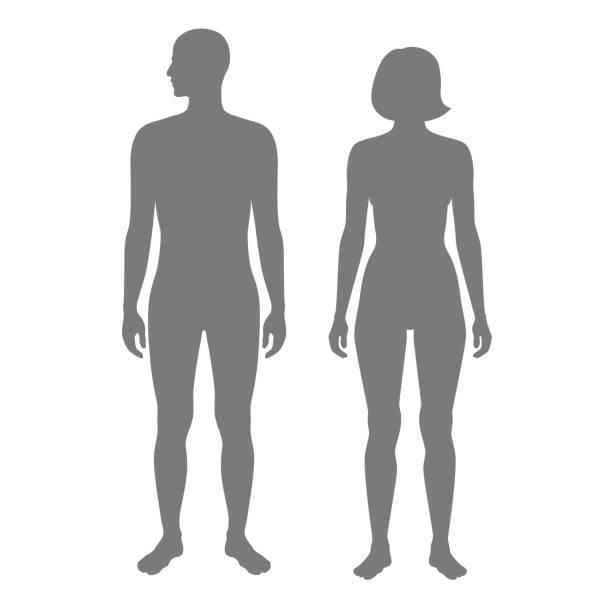 ilustrações de stock, clip art, desenhos animados e ícones de woman and man silhouette - tronco nu