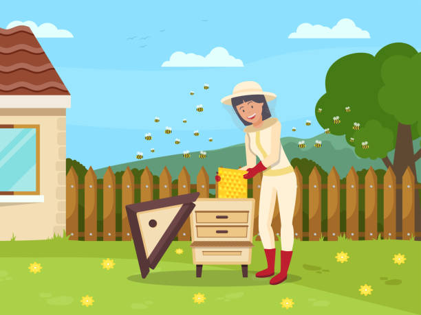Woman Beekeeper Pull Out Honeycombs from Hive. Woman Beekeeper Pull Out Honeycombs from Hive. Protective Suit. Produce Honey. Apiary on Background Cottage. Vector Illustration. Hobby Beekeeping. Natural Honey. Woman in Bee Protection Mask. beekeeper stock illustrations
