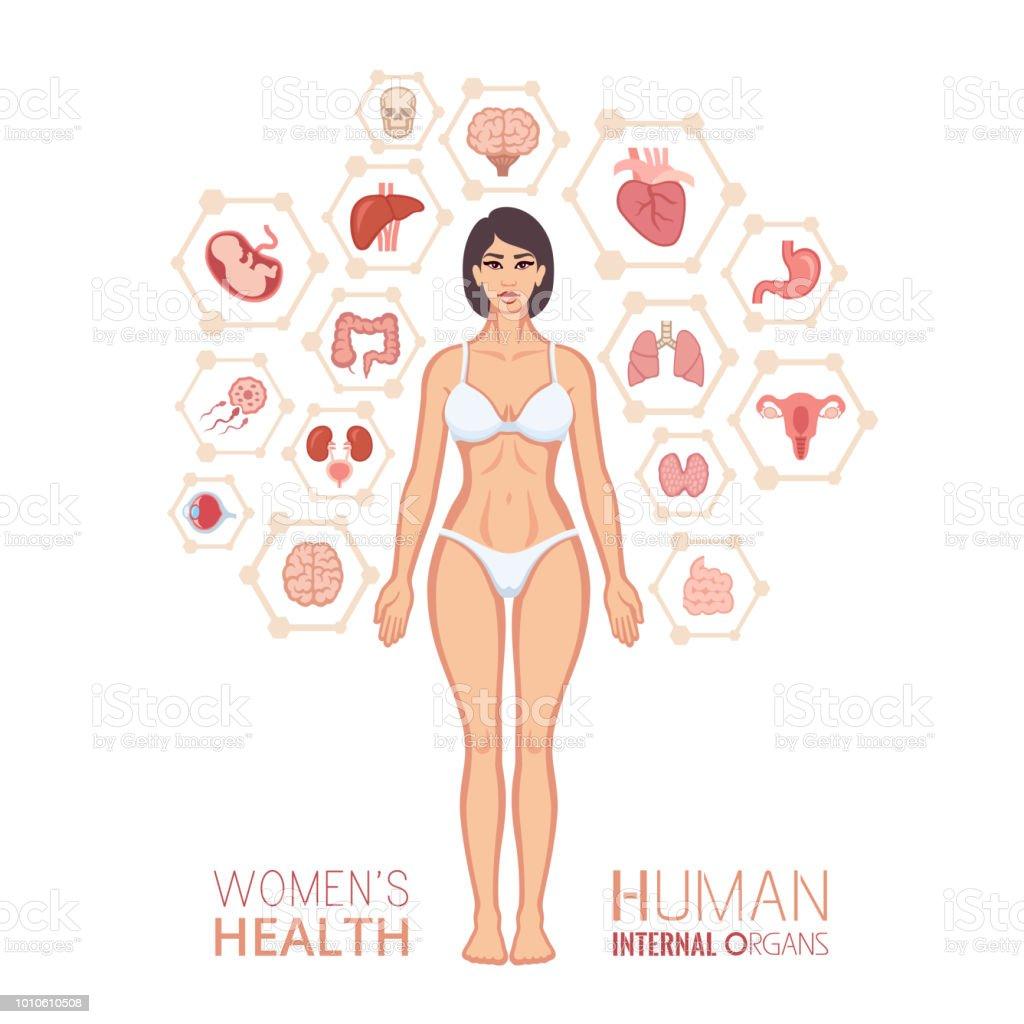 Ilustración de Cuerpo De La Mujer Y Los órganos Internos y más banco ...