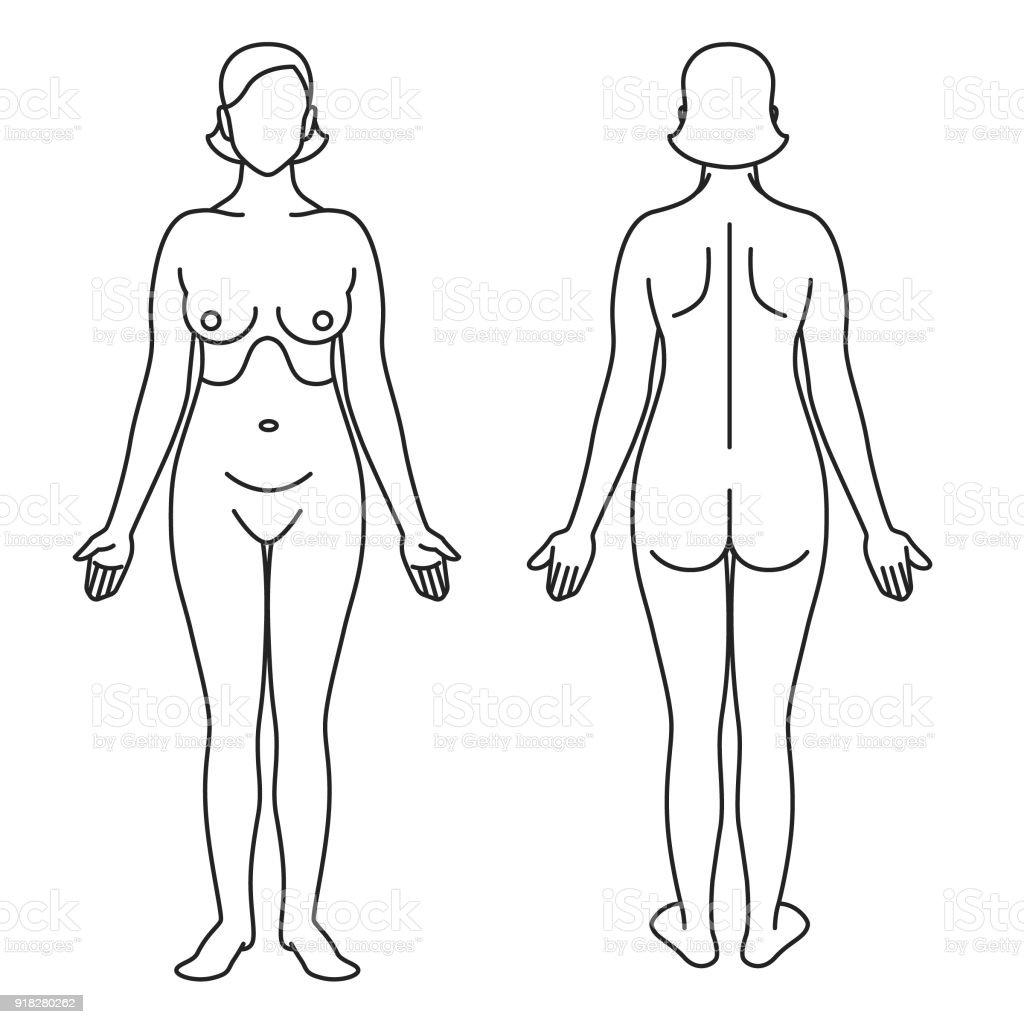 Woman Body As Anatomical Guide Stock Vector Art More Images Of