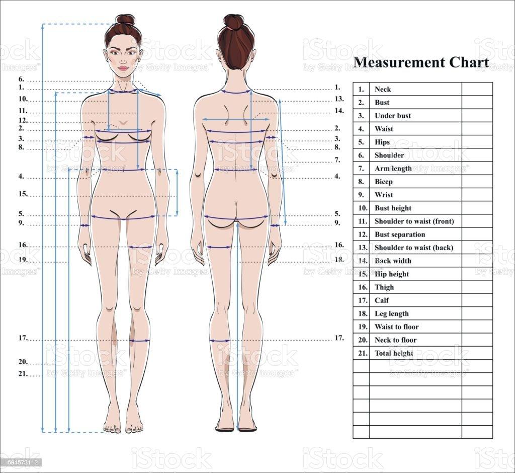 Ilustração de Gráfico De Medição De Corpo Mulher Esquema Para O ...
