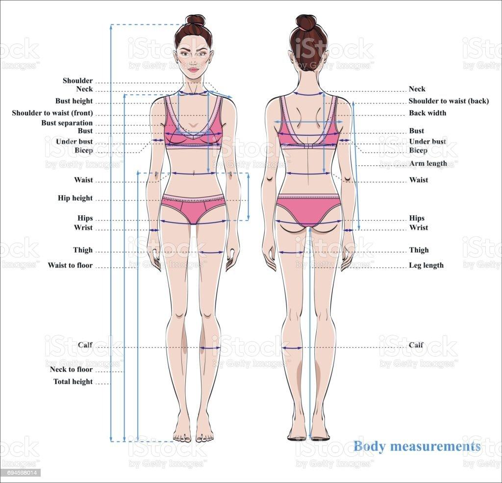Ilustración de Tabla De Medidas De Cuerpo De Mujer Esquema Para El ...
