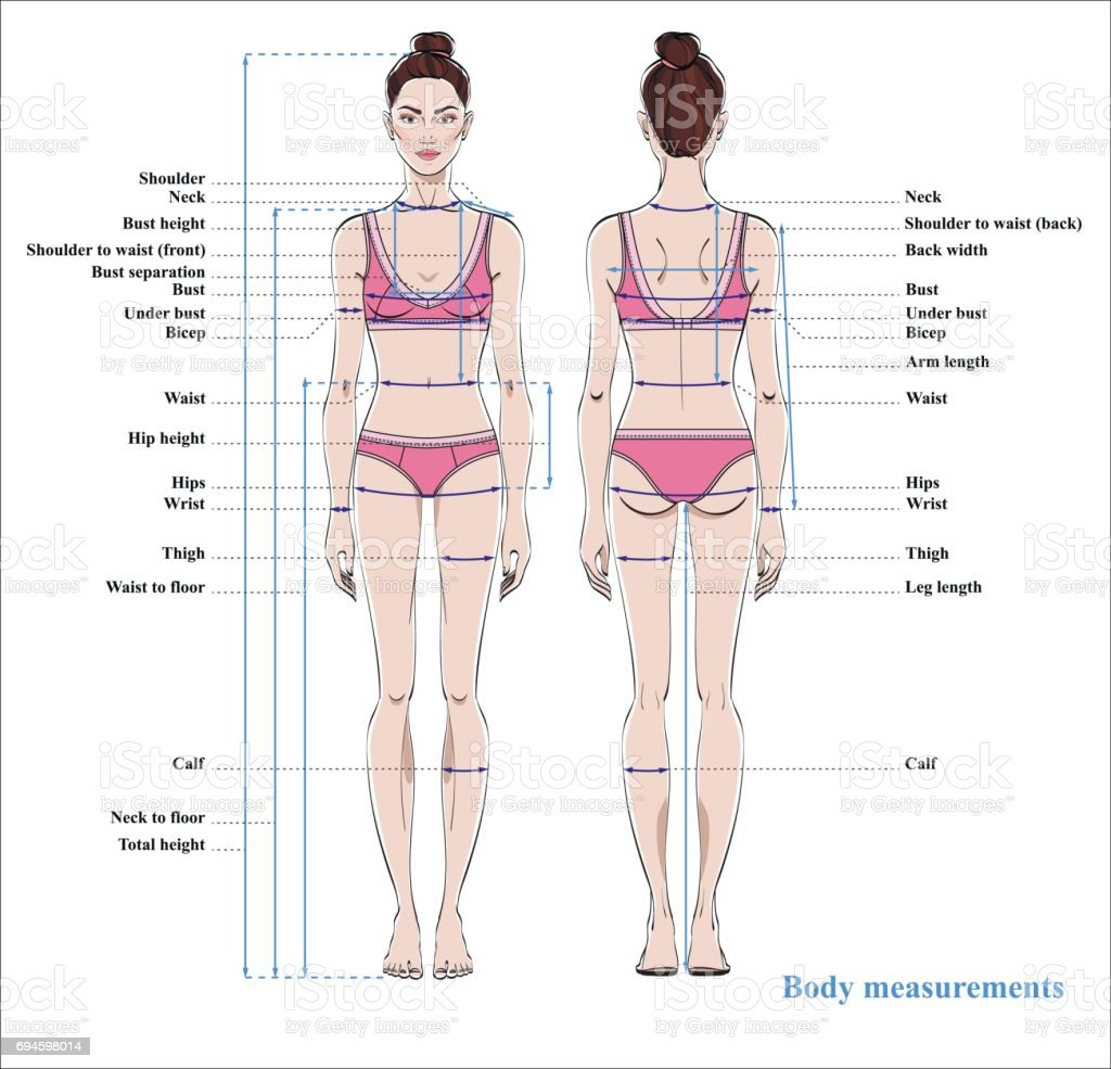 Bust Human Body Diagram - Electrical Work Wiring Diagram •