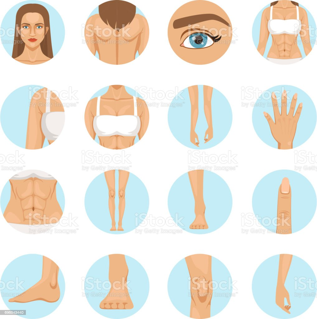 Woman body parts. Human anatomy vector illustration isolate on white vector art illustration
