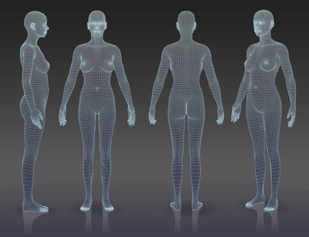 Woman body set The three-dimensional grid forms woman bodies, all lines are not expanded. You can change line thickness if it is necessary. EPS 10, file contains blending objects. human representation stock illustrations