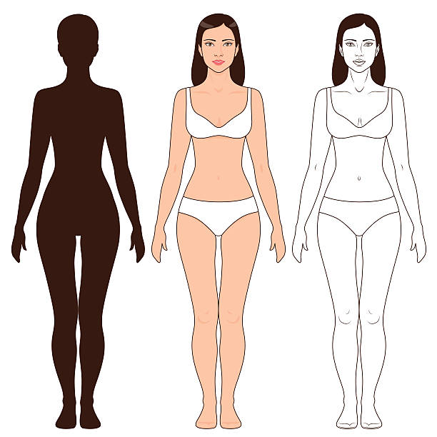 Woman Body Shape and Silhouette Template Woman body shape, outline and silhouette template. Full length front view of a standing girl isolated on white. female likeness stock illustrations