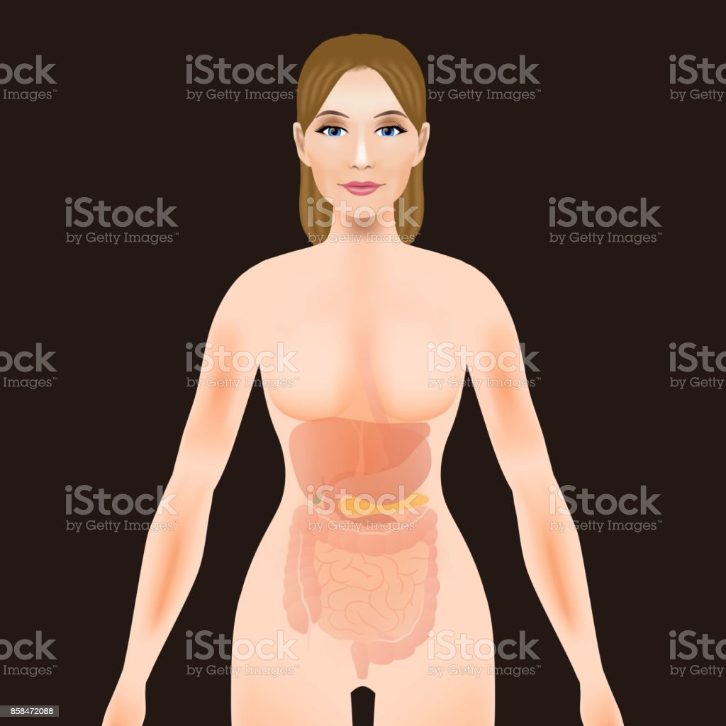 woman body silhouette digestive organs, vector illustration vector art illustration