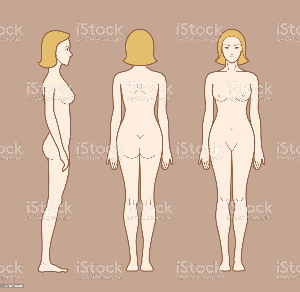 Mujer Cuerpo - Arte vectorial de stock y más imágenes de Anatomía ...